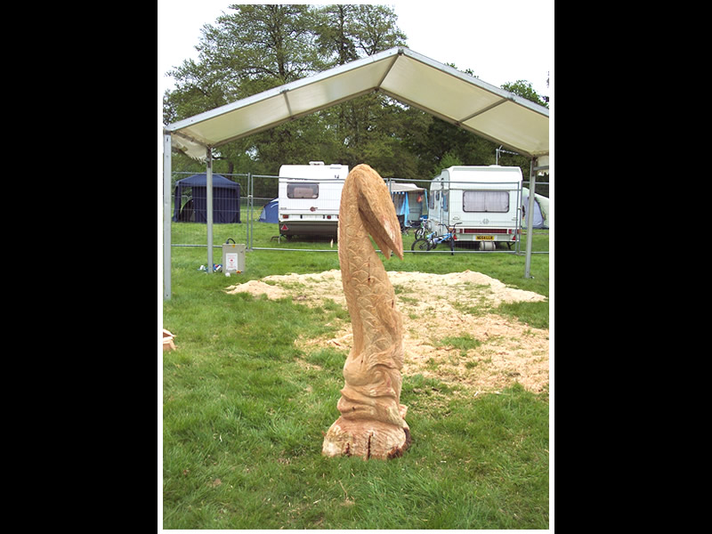 picture of hampshire show